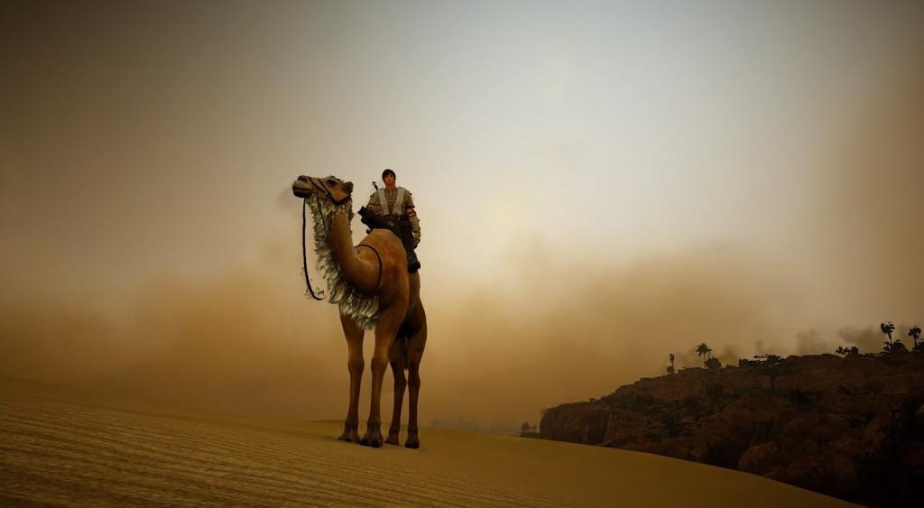 Black Desert Camel