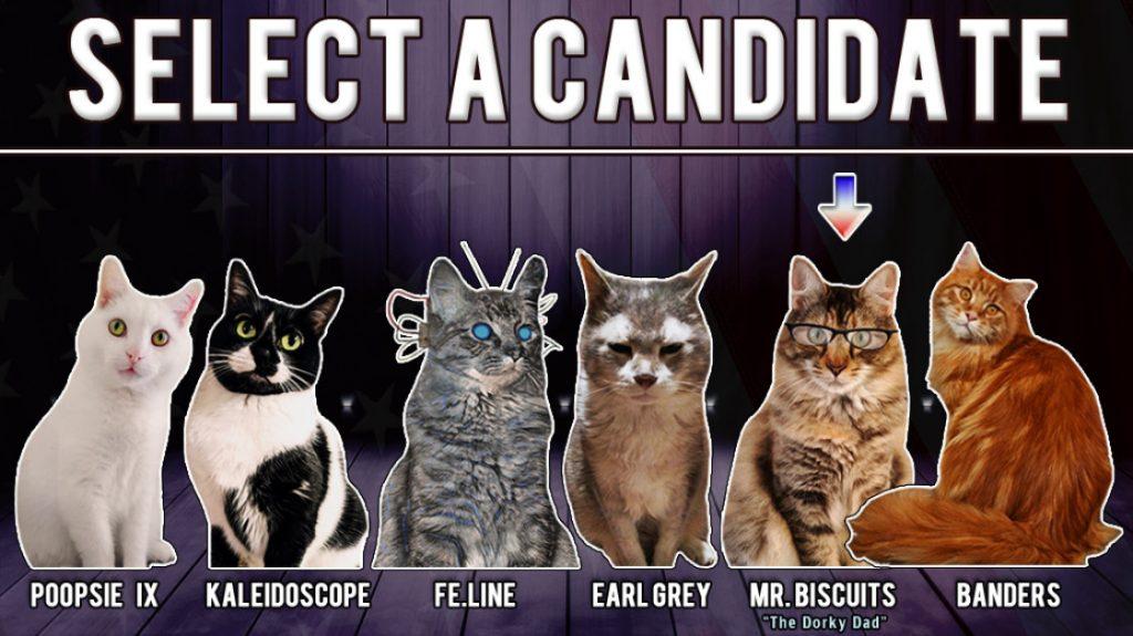 Cat President 2