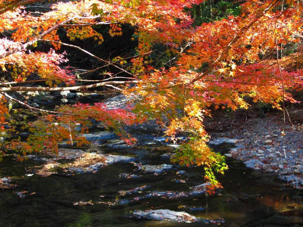 Tsushima Fall Leaves